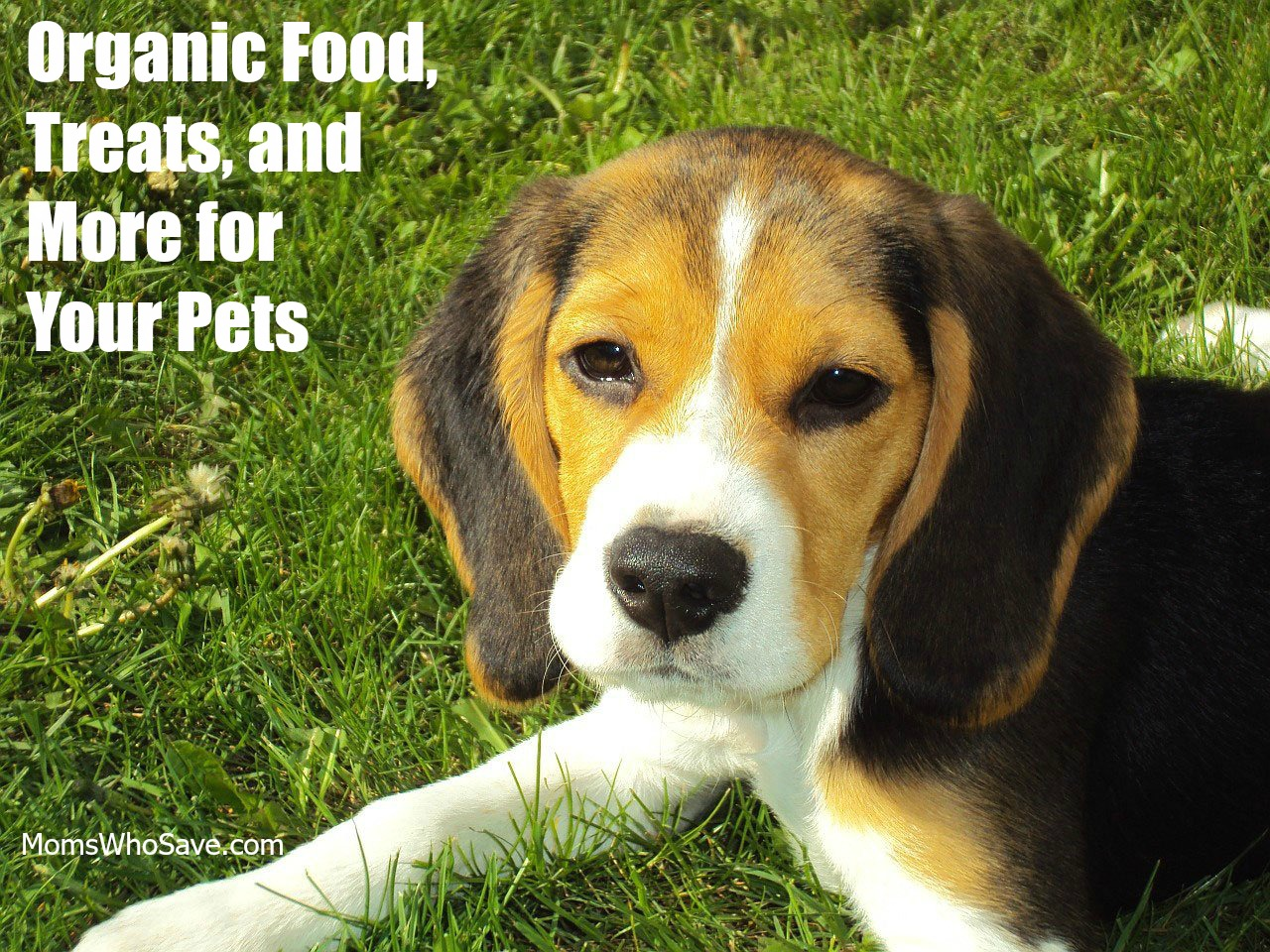 Organic Food, Treats, and More for Your Pets