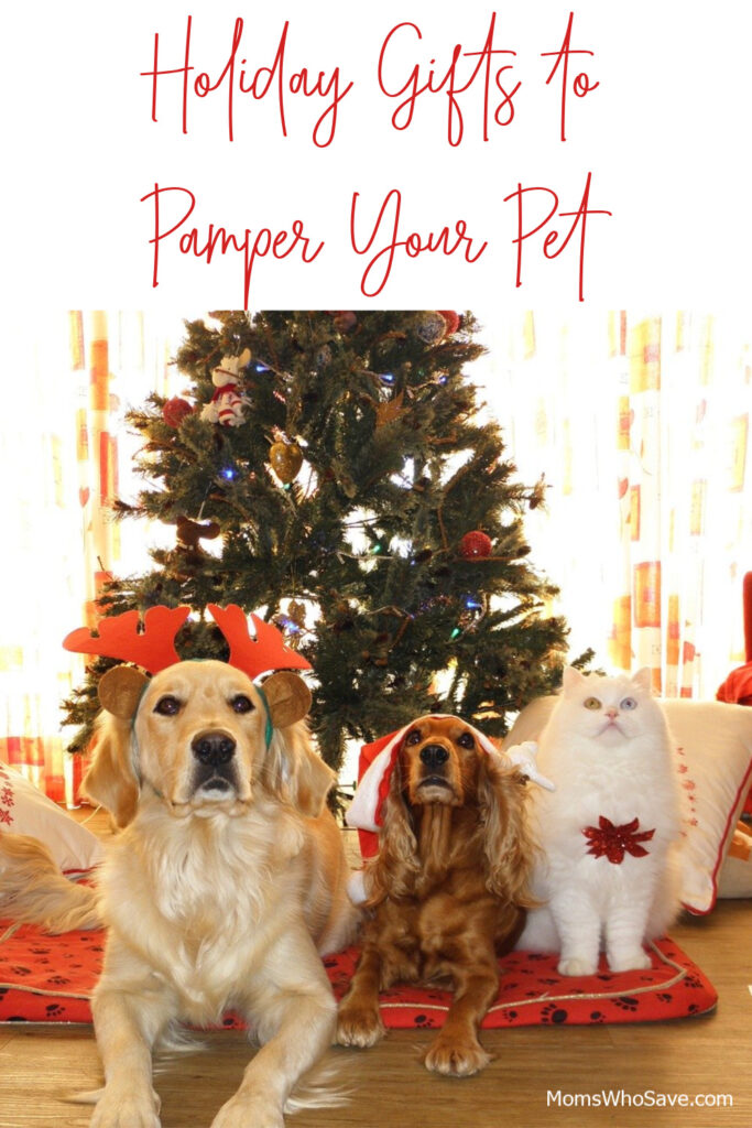 holiday gifts for your pets