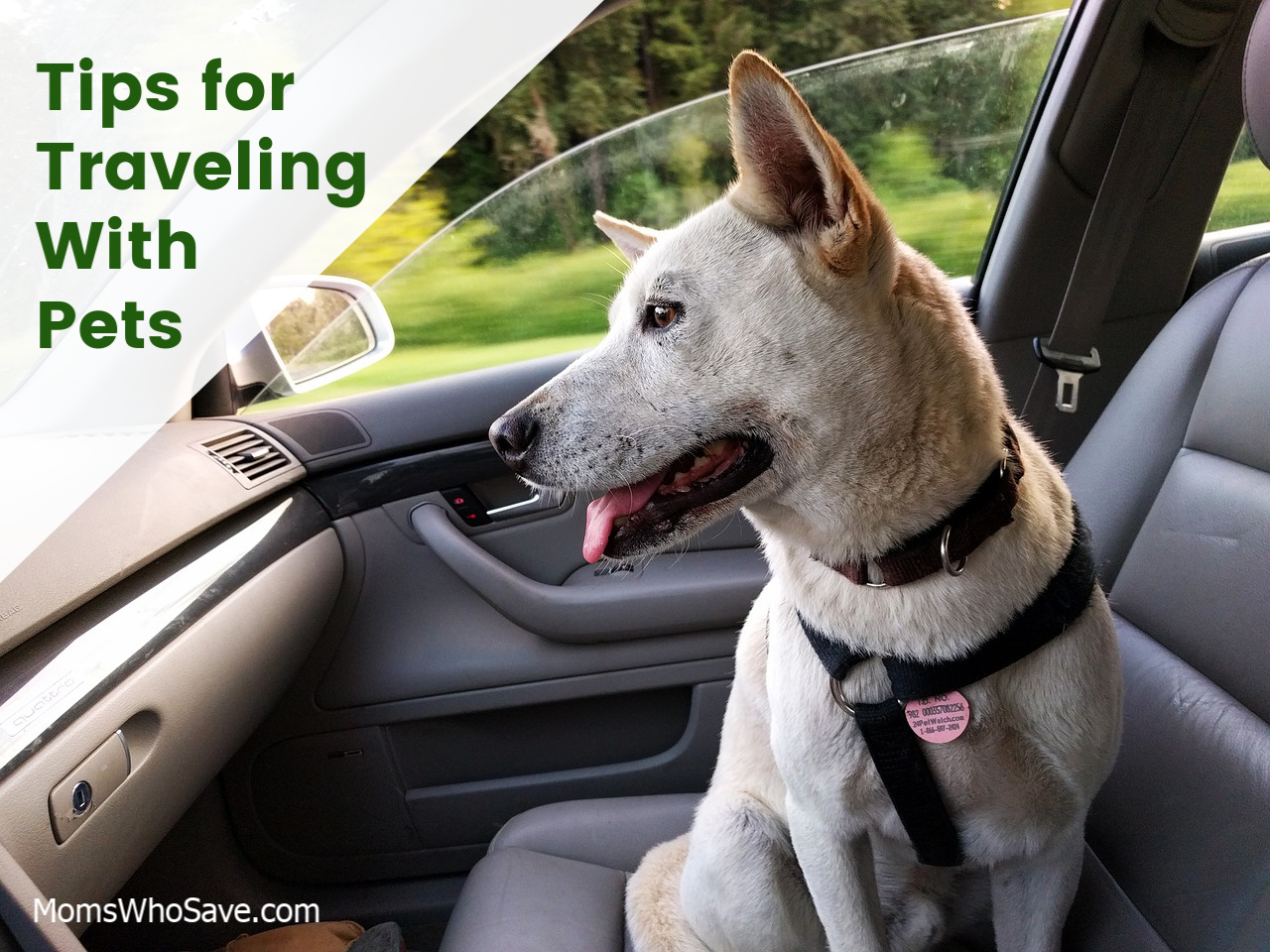 tips for taking a road trip with pets