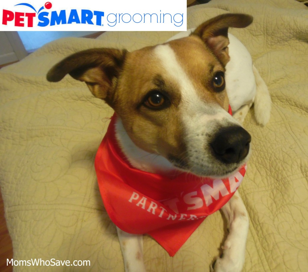PetSmart grooming