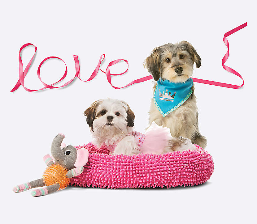 PetSmart FREE Puppy Love Event — February 11th