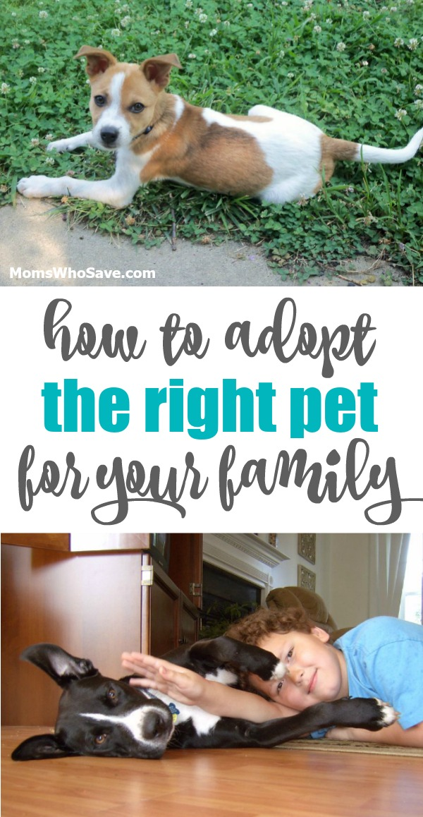 where to adopt a pet