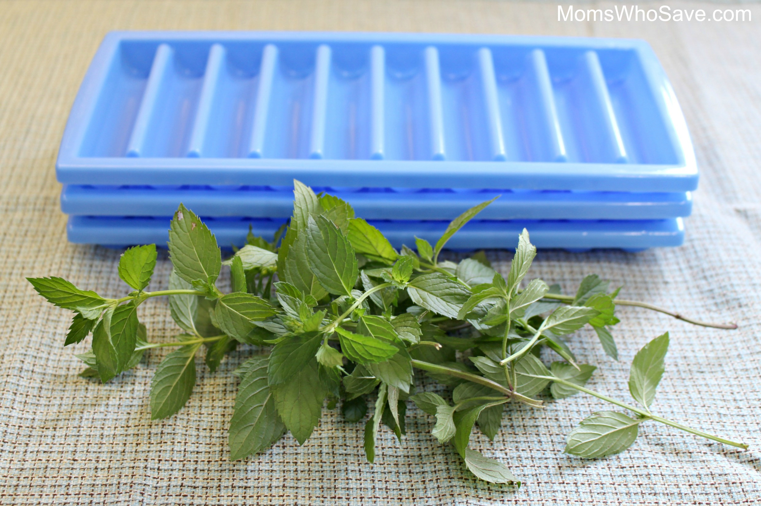making mint infused ice cubes