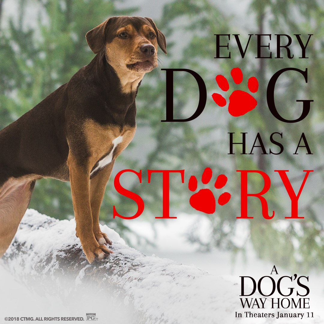 a dogs way home sweepstakes