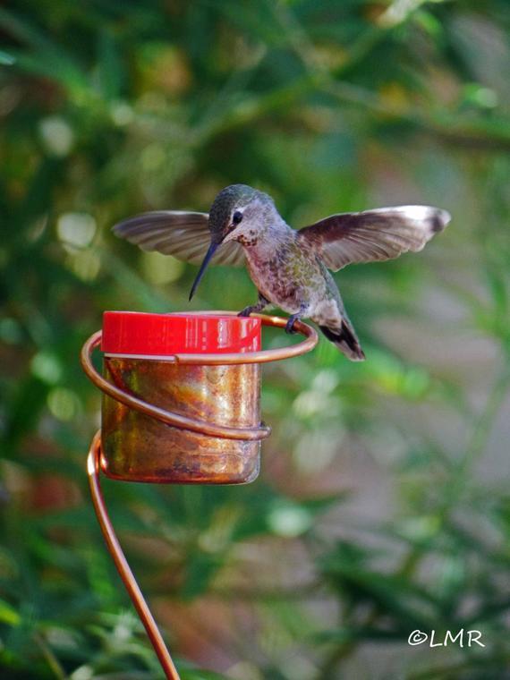 Flower Pot Stake Bee-Proof Copper Hummingbird Feeder