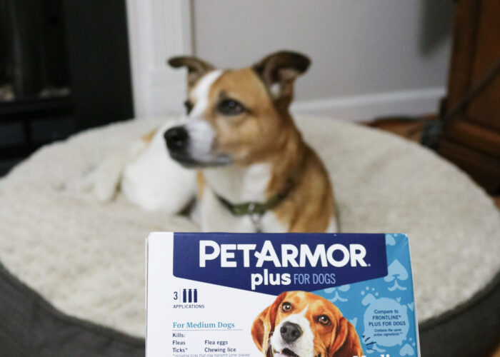 Tips to Protect Your Dog From Fleas and Ticks + Pick Up PetArmor® Plus for a Great Price at Walmart