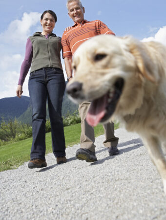 dog owner expenses