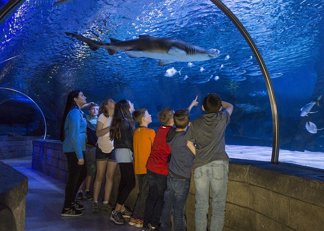 aquarium Tunnel moa