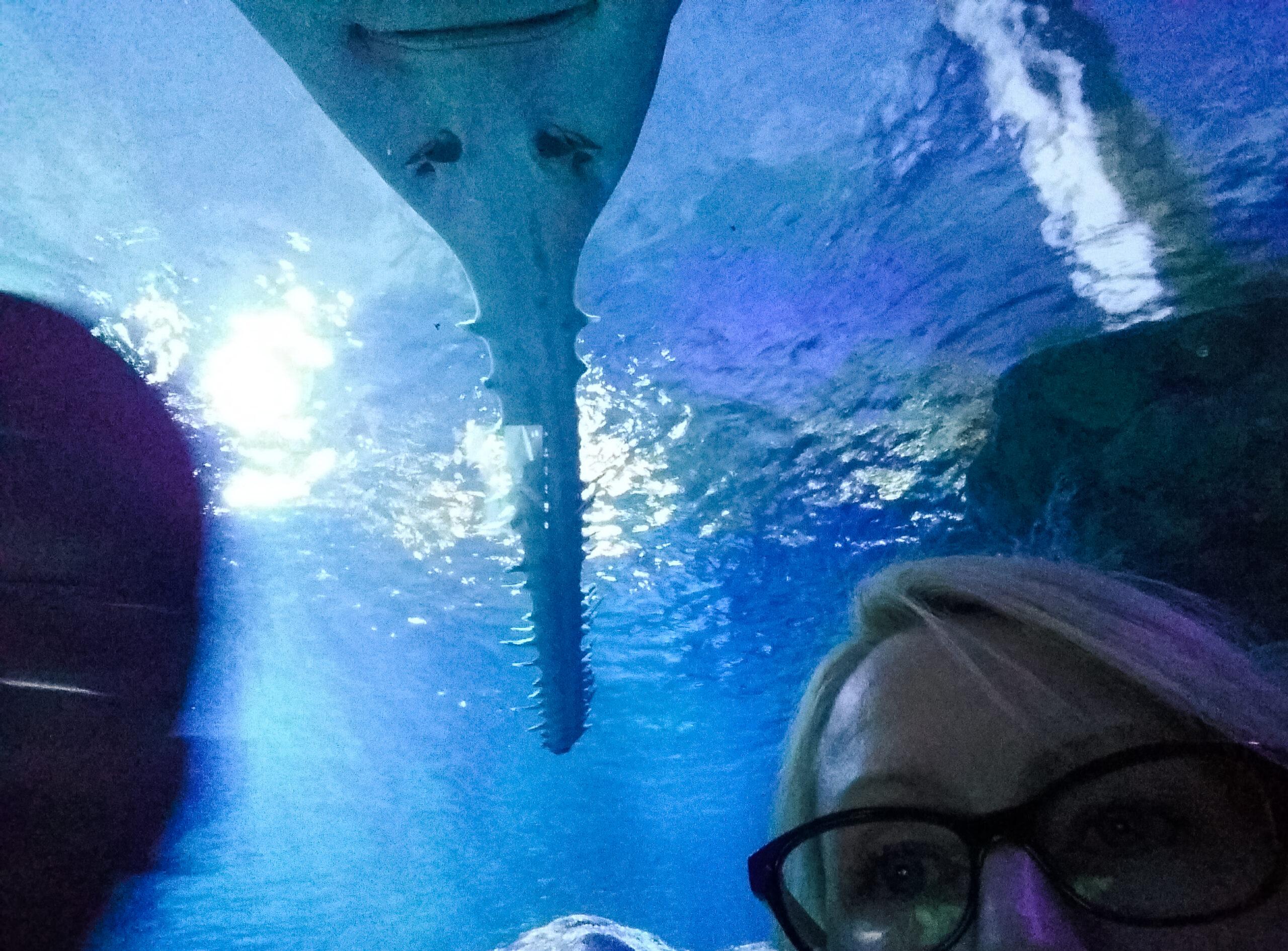 aquarium at mall of america