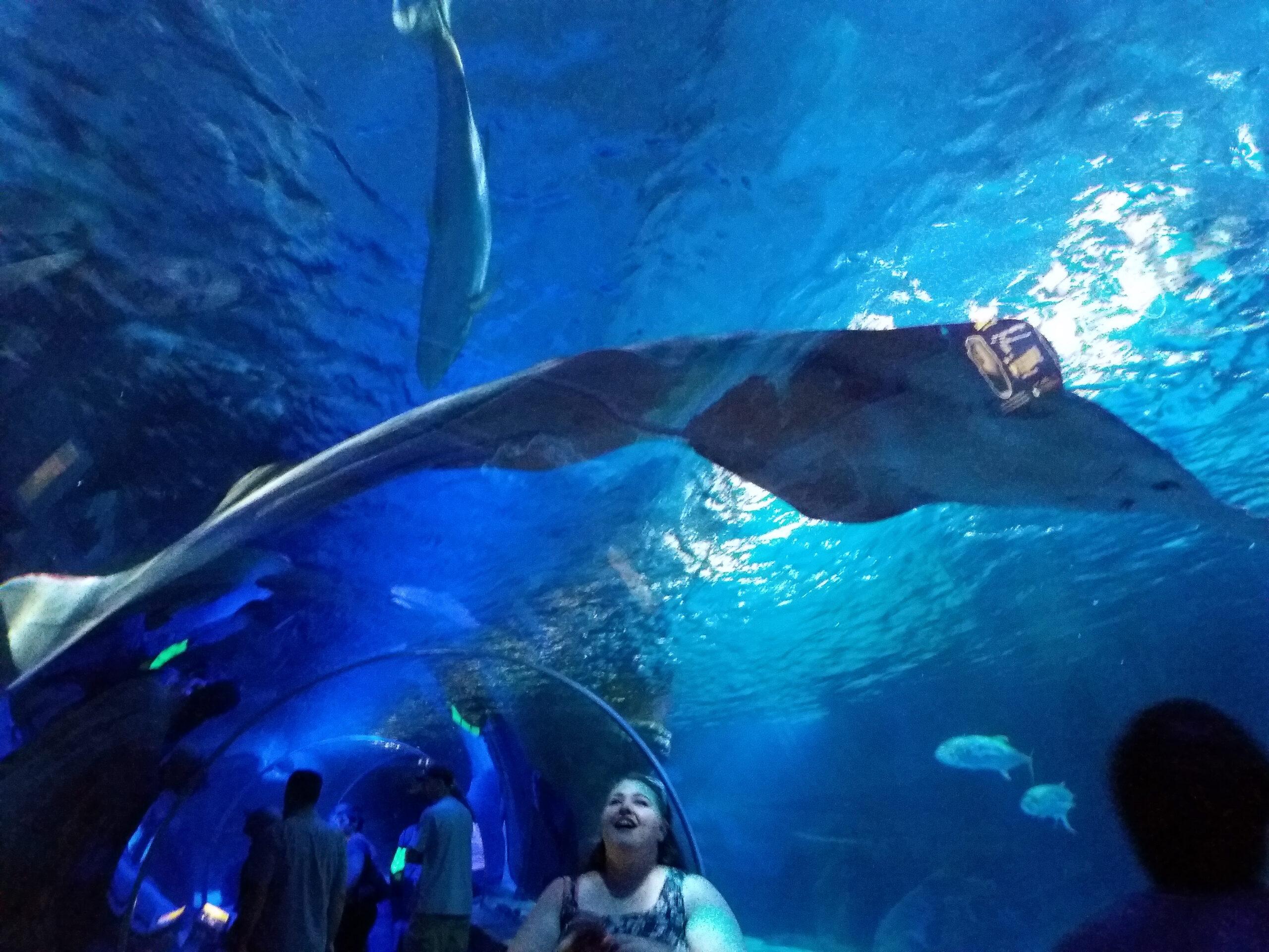 aquarium at the mall of america