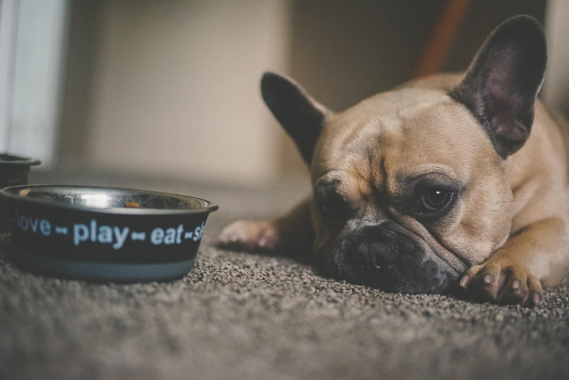 Digestive Issues in Dogs