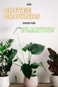 are coffee grounds good for houseplants