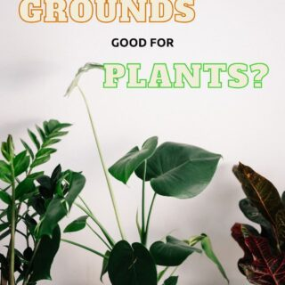Are Coffee Grounds Good for Houseplants? (Yes, but read these important tips.)
